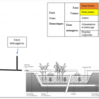 Aquatron phytoepuration
