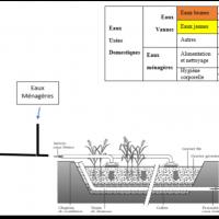 Aquatron phytoepuration